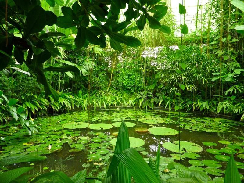 Uff bogot informaci n general for Actividades jardin botanico bogota
