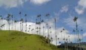 Salento: Valle del Cocora.  Fuente: Uff.Travel